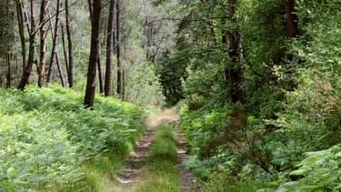 Une image d'illustration d'une forêt.