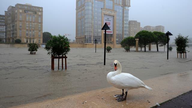 Inondations à Montpellier, le 29 septembre 2014.