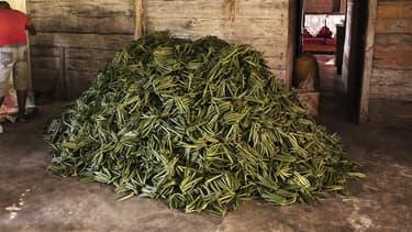 Le prix du kilogramme de vanille de Madagascar a été multiplié par huit en quatre ans, et sa demande ne cesse d'augmenter.