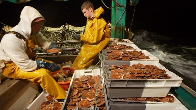 La pêche à la coquille Saint-Jacques est réglementée dans le temps en France, mais pas en Angleterre (Illustration)