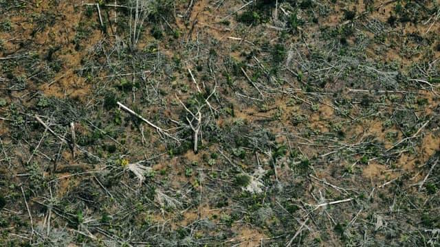 Vue aérienne d'une zone de déforestation de la forêt amazonienne, le 23 août 2019 près de Porto Velho, dans le nord du Brésil