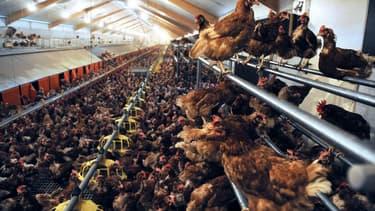 Ceva Santé Animale affirme occuper la 3e place mondiale en biologie aviaire (n°1 au Brésil et n°2 aux USA) et affiche pour ambition de devenir le leader d'ici 2020