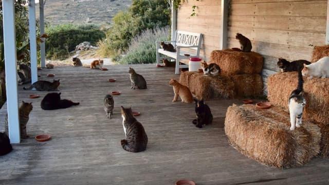 55 chats peuplent le refuge de Joan Boswell sur l'île de Syros.