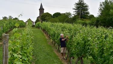Les viticulteurs français ont pu commencer de distiller depuis le vendredi 5 juin quelque 2 millions d'hectolitres de vin non vendu en raison de la baisse de consommation durant le confinement, afin de fabriquer du bioéthanol ou du gel hydroalcoolique.