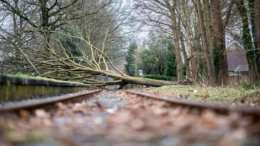 Un arbre est tombé sur la voie à Münster, au nord-ouest de l'Allemagne.