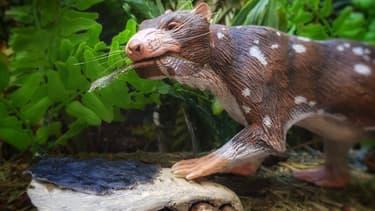 Une représentation d'une nouvelle espèce de mammifère, âgée de 72 à 74 millions d'années, découverte en Patagonie chilienne.