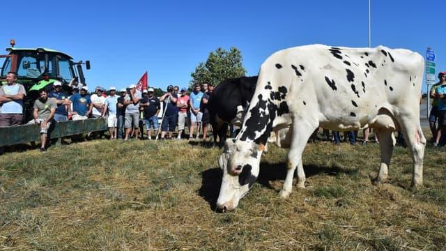 Lidl a collecté 4 millions d'euros pour les reverser aux éleveurs en grande difficulté.