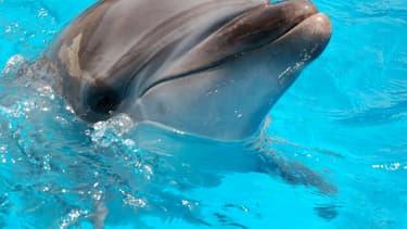 Richard O'Barry, ancien dresseur de la série Flipper devenu défenseur des dauphins en liberté et connu pour sa lutte contre la chasse de ces cétacés au Japon, était retenu ce mercredi à Tokyo par les services d'immigration, a annoncé son ONG - Mercredi 20 janvier 2016