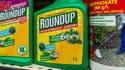 Ségolène Royal souhaite interdire au 1er janvier 2016 la vente de désherbants à base de glyphosphate. (image d'illustration)