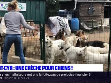 Métropole de Lyon: une crèche pour faire garder ses chiens