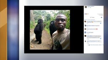 Le ranger Mathieu Shamavu avec deux gorilles du parc national des Virunga, en République démocratique du Congo.