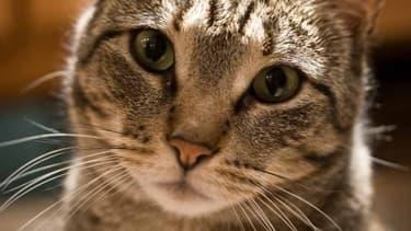 """La commission des lois de l'Assemblée a reconnu que les animaux comme """"doués de sensibilité"""""""