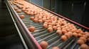 De nouveaux établissements viennent grossir la liste des entreprises françaises concernées par le scandale des œufs contaminés au fipronil. (image d'illustration)
