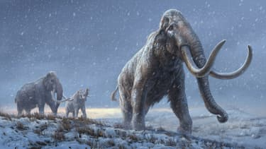 Illustration représentant un mammouth parue dans la revue Nature