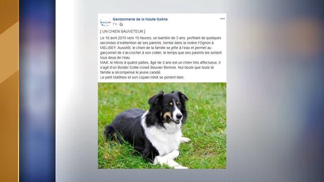 Un chien a sauvé un enfant de la noyade jeudi.