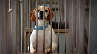 Un chien dans un refuge de la SPA à Gennevilliers, en 2007