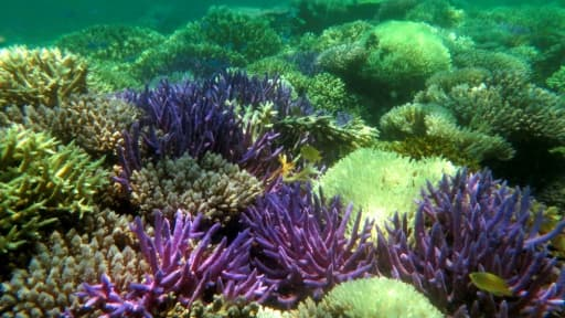 Photo fournie par l''association Pala Dalik qui œuvre en faveur des récifs coralliens, le 19 septembre 2016 à Nouméa en Nouvelle Calédonie