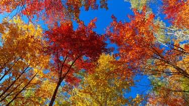Des arbres à l'automne