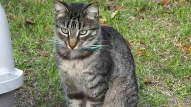Le jeune chat Enzo a été retrouvé mort, transpercé d'une flèche.