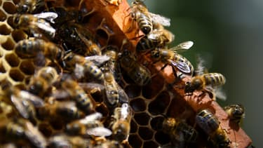 Une ruche à Pont-de-Montvert, en Lozère, en juin 2018