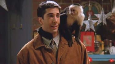 """Ross et Marcel dans la série """"Friends"""""""