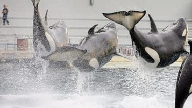 Des orques - Photo d'illustration