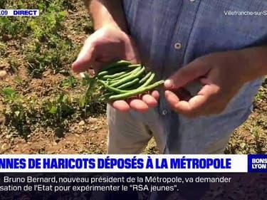 Lyon: un entrepreneur offre deux tonnes de haricots bio pour saluer l'arrivée des Verts