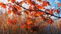 Couleurs d'automne au Canada.