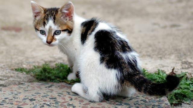 Un chaton. (Photo d'illustration)