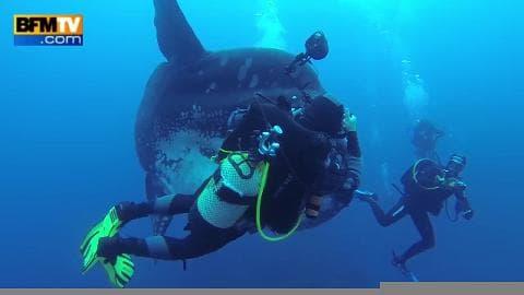 Hawaï : Des plongeurs vivent une rencontre incroyable