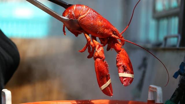 La Suisse veut étourdir le homard avant de le plonger dans l'eau bouillante. (Photo d'illustration)