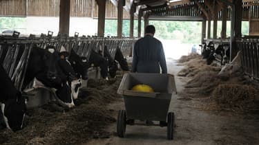 Les éleveurs laitiers sont particulièrement concernés par cette nouvelle aide.