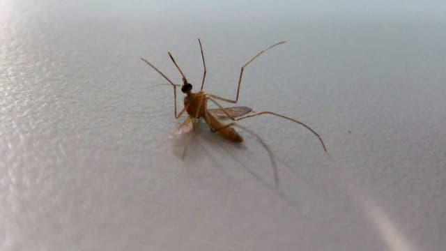 Deux étudiants burkinabés ont mis au point une solution très innovante contre le paludisme.