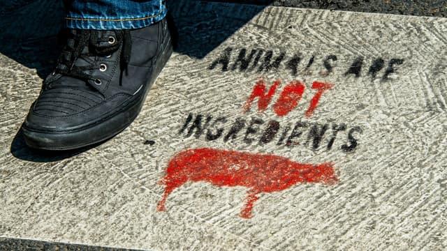 Un slogan vegan peint sur un passage piéton à Lille, en août 2018.