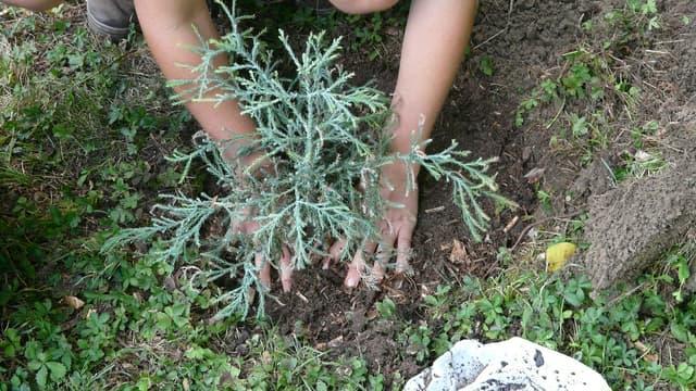 Jardiniers amateurs et professionnels, les produits SELVERT s'adresse à toutes les mains vertes.