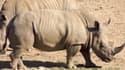 455 rhinocéros ont été tués par des braconniers en 2012