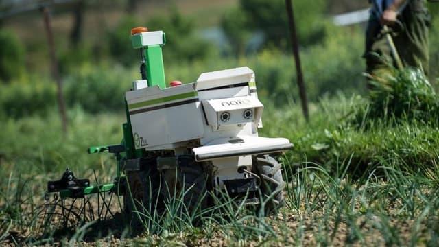 En effectuant le désherbage mécanique des cultures maraîchères, le robot OZ évite le recours au désherbant chimique.