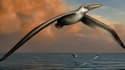 Une vue d'artiste du Pelagornis Sandersi, le plus grand oiseau du monde.