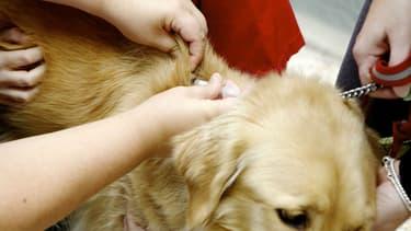 Un cabinet vétérinaire solidaire a ouvert ses portes en banlieue de Lille. (photo d'illustration)