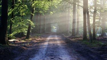 Les rendements du placement forêts oscillent en moyenne entre 0,5 à 2% par an avant impôts.