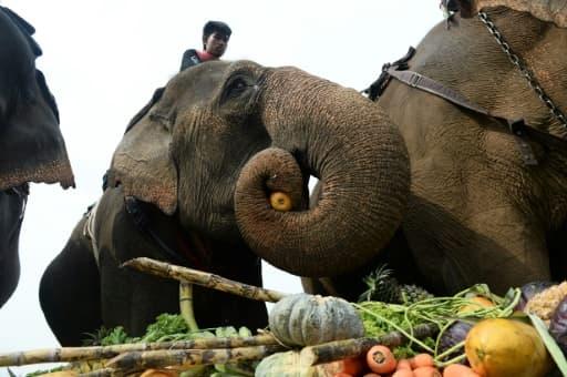 Des éléphants profitent du buffet de fruits et légumes lors du tournoi de polo à dos d'éléphants à Bangkok, le 10 mars 2016