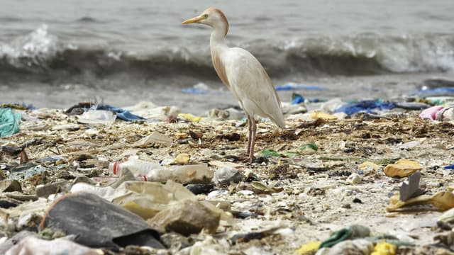 Image d'illustration - Un oiseau posé sur une plage couverte de détritus à Dakar, au Sénégal.