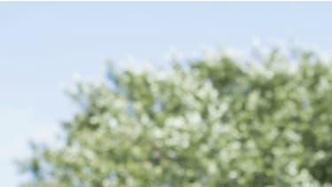 Nez qui coule, éternuements, conjonctivite, toux, asthme, urticaire sont des symptômes bien connus du rhume des foins.
