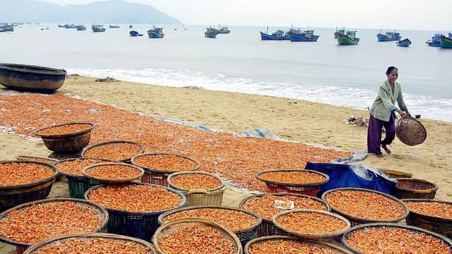 Des crevettes viennent d'être pêchées au Viêtnam le 14 janvier 2003 (illustration)