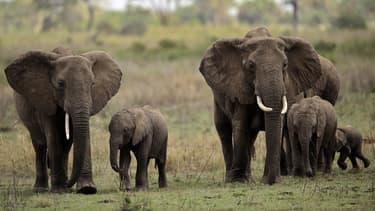 Des éléphants dans le parc national du Serengeti, en Tanzanie, en octobre 2010. (photo d'illustration)