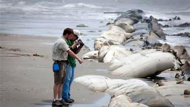 """Scientifiques sur la plage de Port Fourchon, en Louisiane, que des résidus de pétrole commencent à atteindre. La compagnie pétrolière BP va déployer """"dans les deux prochains jours"""" un dôme de confinement pour tenter de stopper la fuite de pétrole à l'orig"""