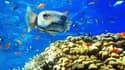 Pour découvrir le monde du silence ou pour pêcher en eaux profondes, plus besoin de passer ses brevets de plongée.