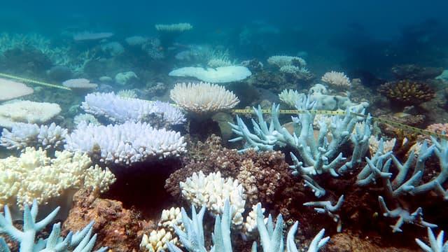 Quatre espèces de langoustes, une espèce d'étoile de mer, onze espèces d'éponges et une quinzaine d'espèces de corail ont été découvertes. (illustration)