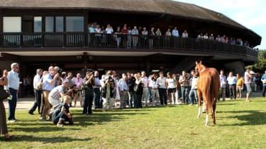 Des acheteurs de Dubaï, du Qatar, des pays de l'Est seront présents à Deauville pour la vente de yearlings.
