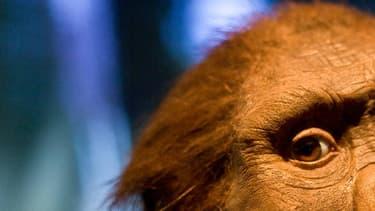Lucy, la plus célèbre des australopithèques, vivait en Afrique il y a 3,18 millions d'années